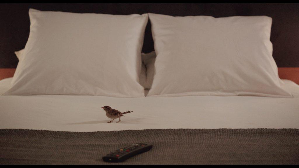 bird_people-photo5_archipel-35