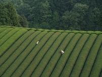 JEUDI 29 MARS 2012 à 20H ☞ «La forêt de Mogari», un film de Naomi Kawase