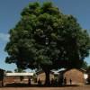 MARDI 6 MAI 2014 à 20h ▶ Sous l'arbre à palabres, de Claire Savary